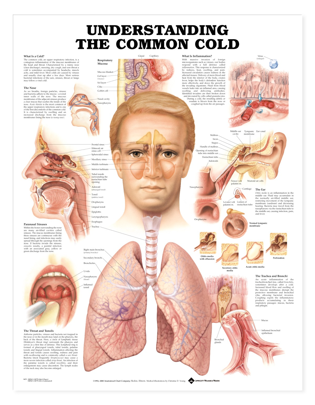 http://healthlifemedia.com/healthy/wp-content/uploads/2014/12/common-cold.jpg