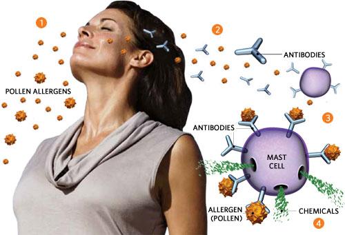 Аллергии-Cell
