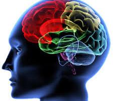 La neurologia è una branca della medicina che si concentra sul disturbo del sistema nervoso. La neurologia si concentra sulla diagnosi e sul trattamento di tutte le Categories di condizioni e malattie che circondano il sistema nervoso centrale e periferico insieme alle suddivisioni, come il sistema nervoso autonomo e il sistema nervoso somatico.