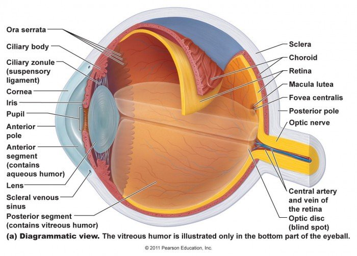 Understanding The Eye: Anatomy | Health Life Media