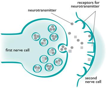 neurotransmitter-diagram
