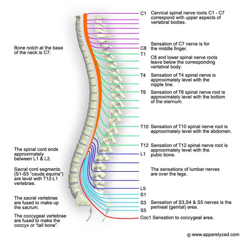 Cuáles son las fracturas de columna? | Health Life Media