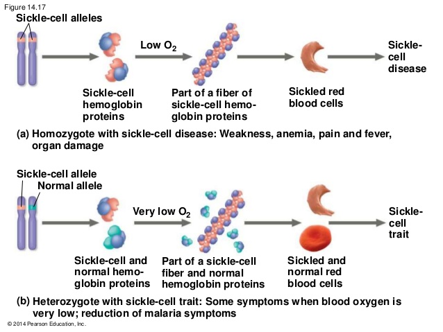 characteristics of the sickle cell disease