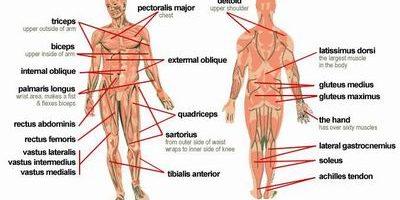 근육통, 사타구니 통증, 근육통을 유발하는 원인, 운동으로 인한 근육통