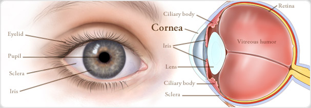 cornea-and-external-disease_page-banner