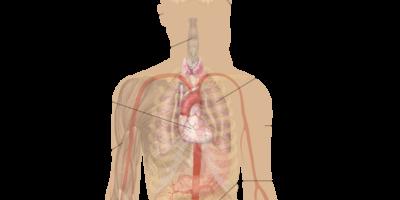 Ipotiroidismo noto anche come malattia della tiroide è un disturbo comune. Con l'ipotiroidismo, la ghiandola tiroide non produce abbastanza ormone tiroideo.