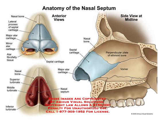 नाक शरीर रचना 1