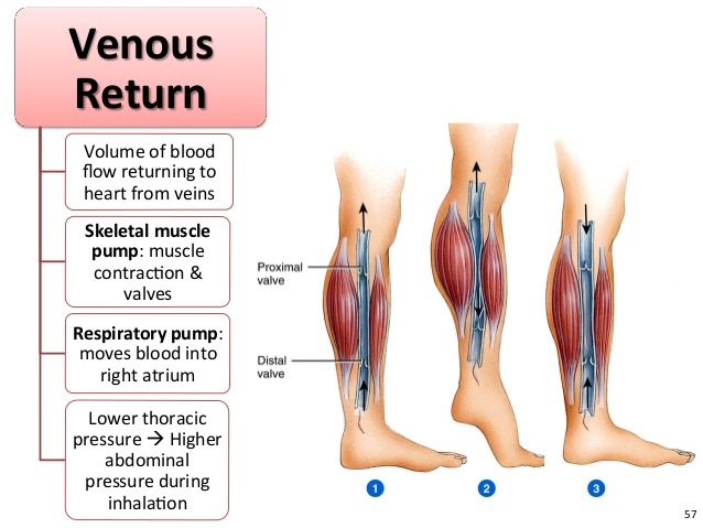 Քրոնիկ Venous Insufficiency3