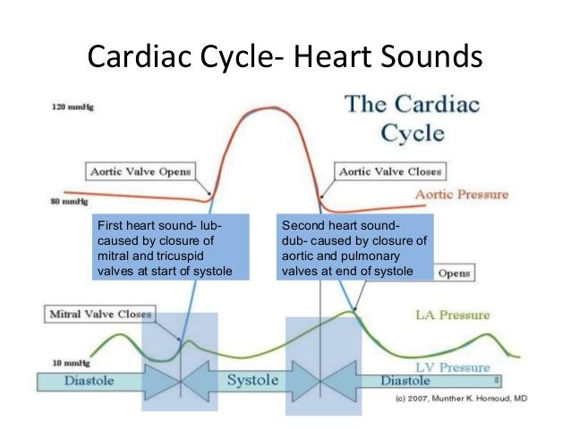 sons cardiovasculares-fisiologia-coração