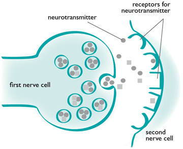 neurotransmitter-diagram
